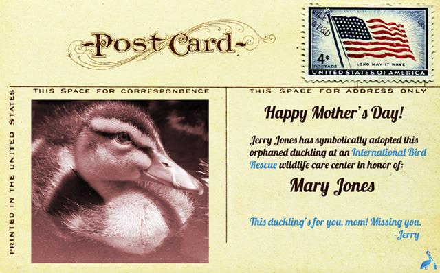 Duckling-Postcard-640px 2