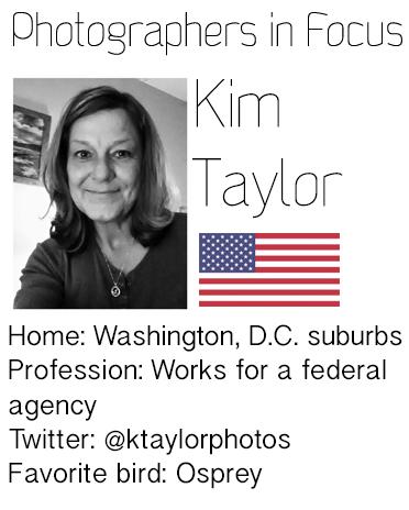 Kim-Taylor
