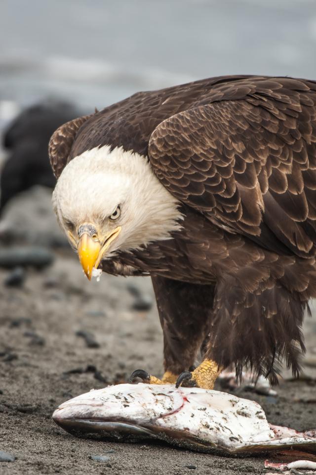 Graham-McGeorge--Eagle2