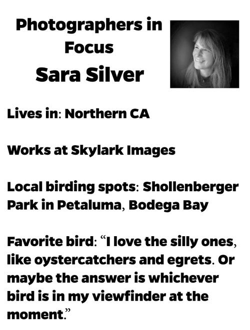 Sara-Silver-Photographer-in-Focus