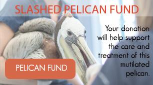 Slashed-pelican-fund