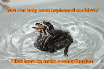 PBGR-Donate-button