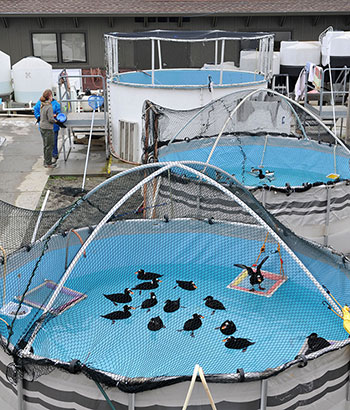 Pools-IBR-SF-Bay-Center-mystery-2015-eblast