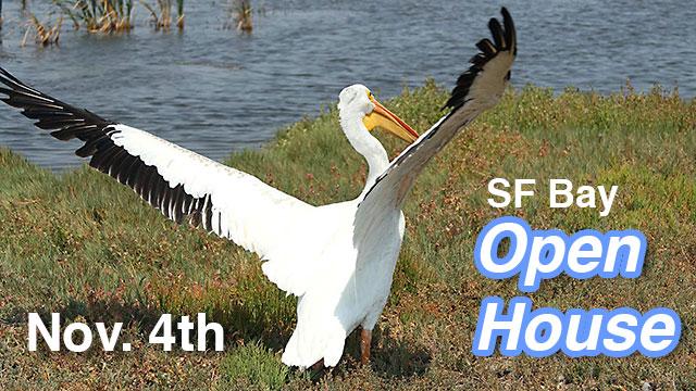 white-pelican-open-house