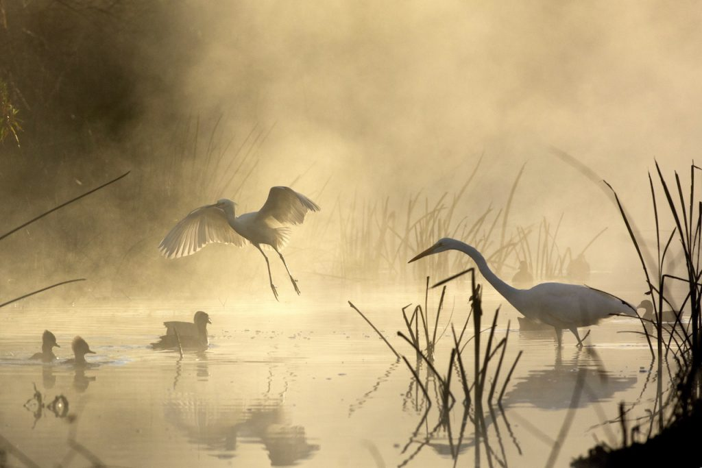 Photo birds in the foggy morning by Sandrine Biziaux-Scherson
